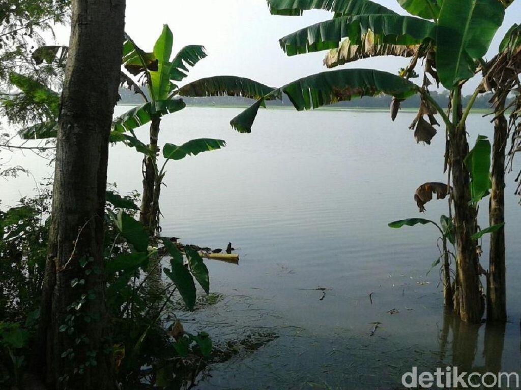 Puluhan Hektar Sawah di Grobogan Terendam Banjir