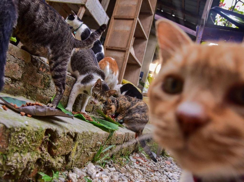 Tidak Suka Kucing Itu Boleh, Tapi Nggak Pake Nyiksa Juga Kali