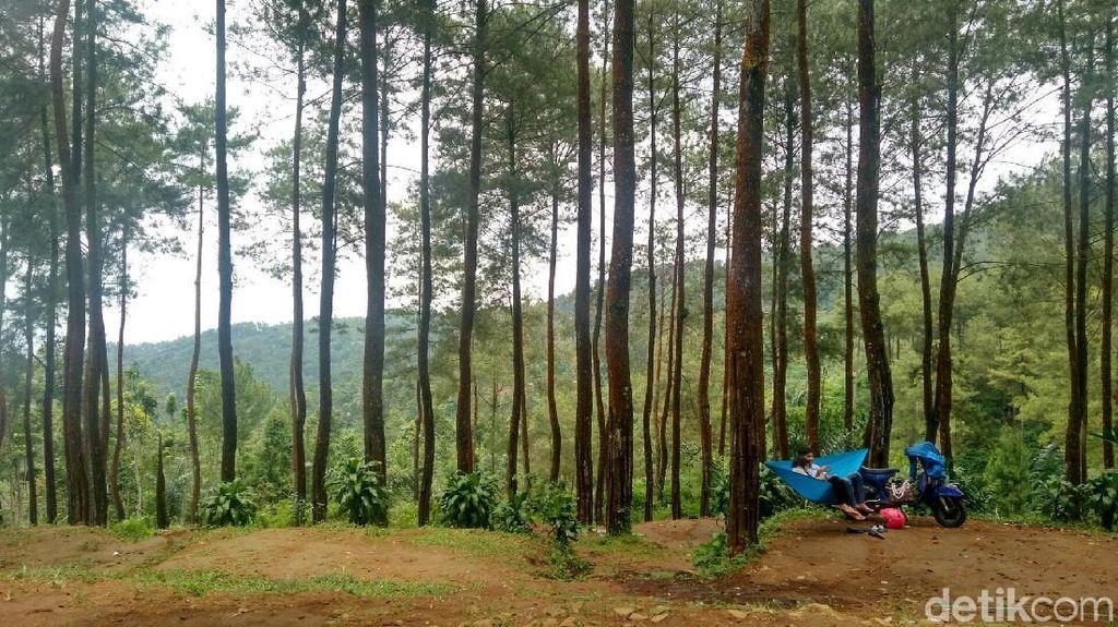 Foto: Hutan Pinus Instagramable dari Ciamis