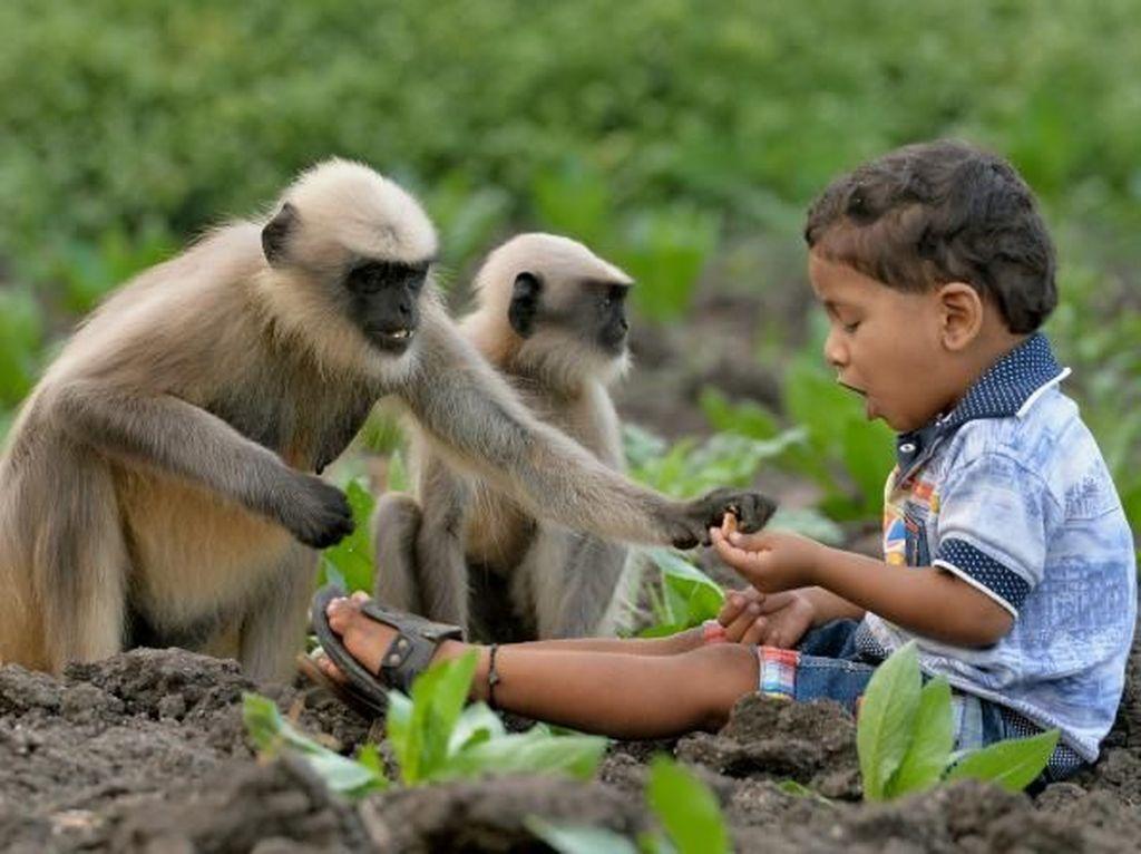Kenalan dengan Samarth Mowgli, Bocah yang Akrab dengan Monyet