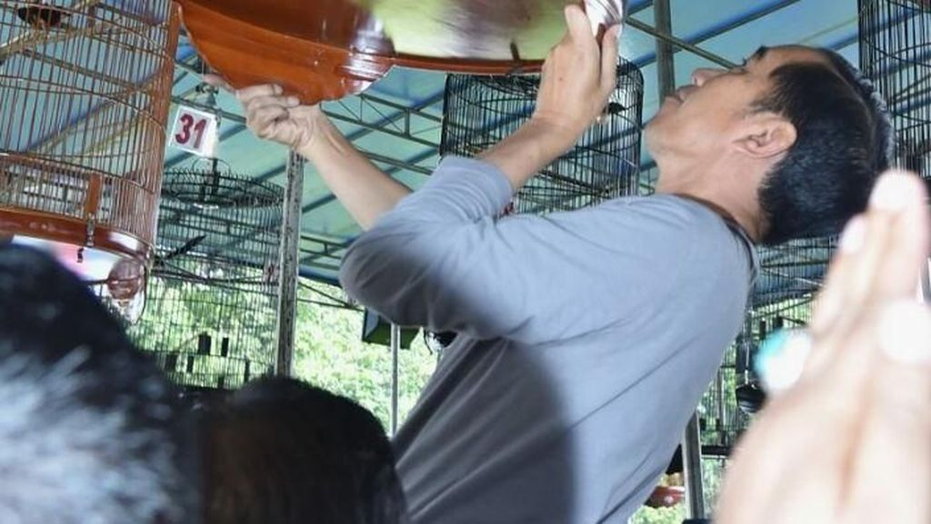 Ini Burung Jokowi yang Kalah di Lomba Kicau Piala Presiden