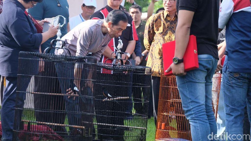 Kalah, Jokowi pun Ditolak Pemenang Lomba Burung