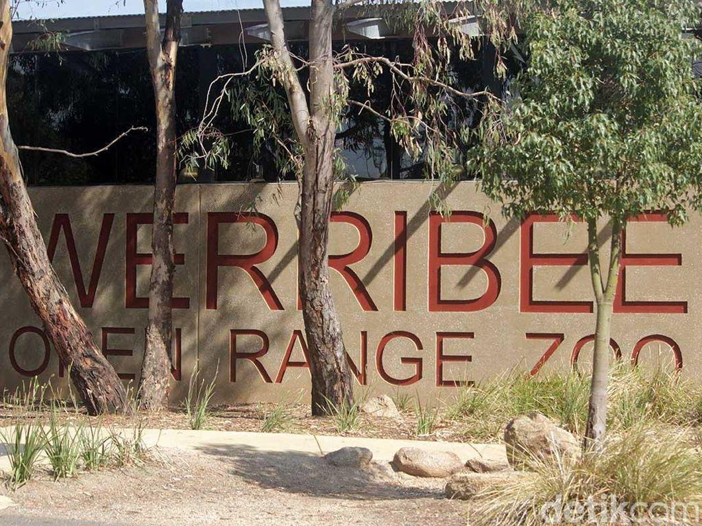 Foto: Rasa Afrika di Australia
