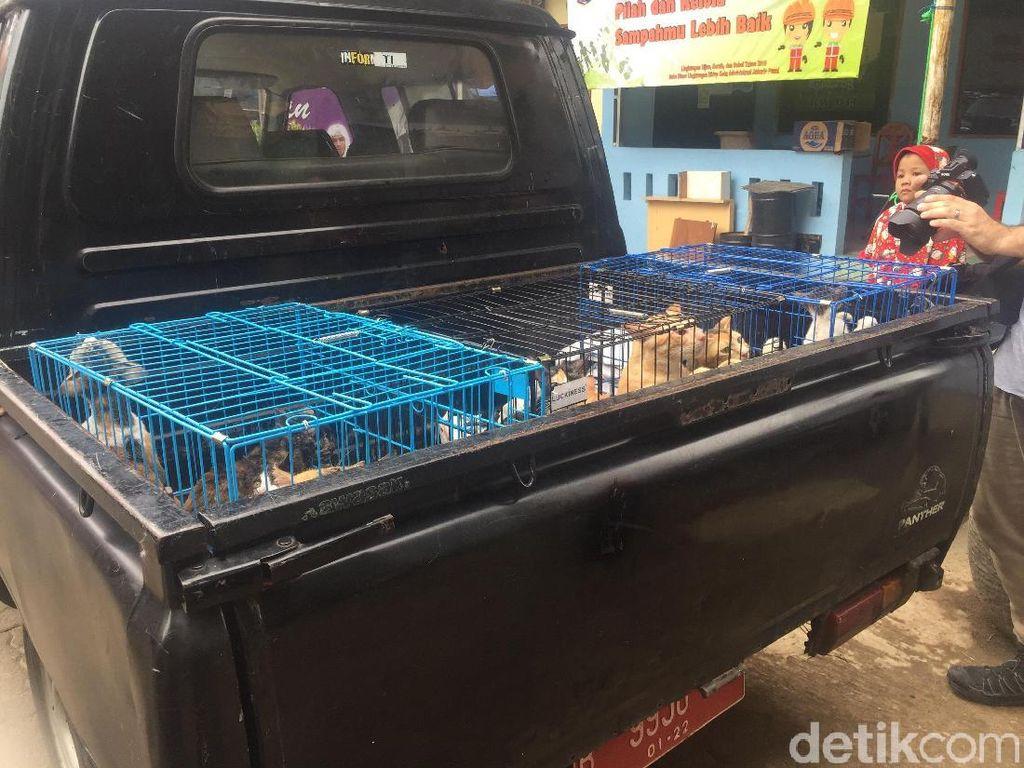 43 Kucing Liar di Rusun Petamburan Ditangkap Petugas