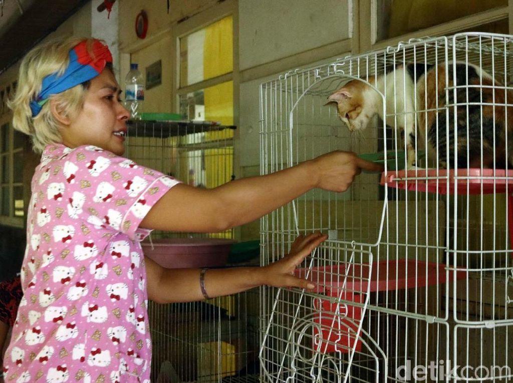 Kesedihan Mama Ciko yang Kucingnya Dibawa Petugas
