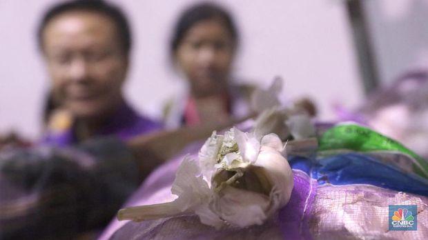 RI Mau Impor Bawang Putih 100 Ribu Ton, Apa Kata Mentan?