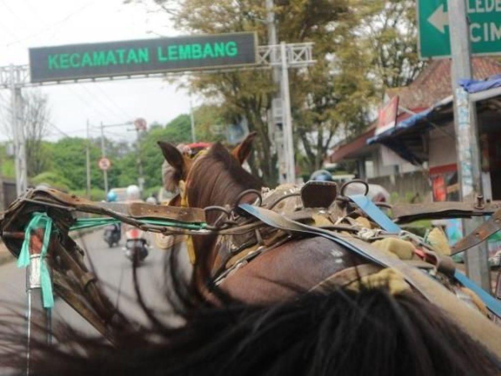 Naik Delman Keliling Lembang, Mesti Coba Nih!