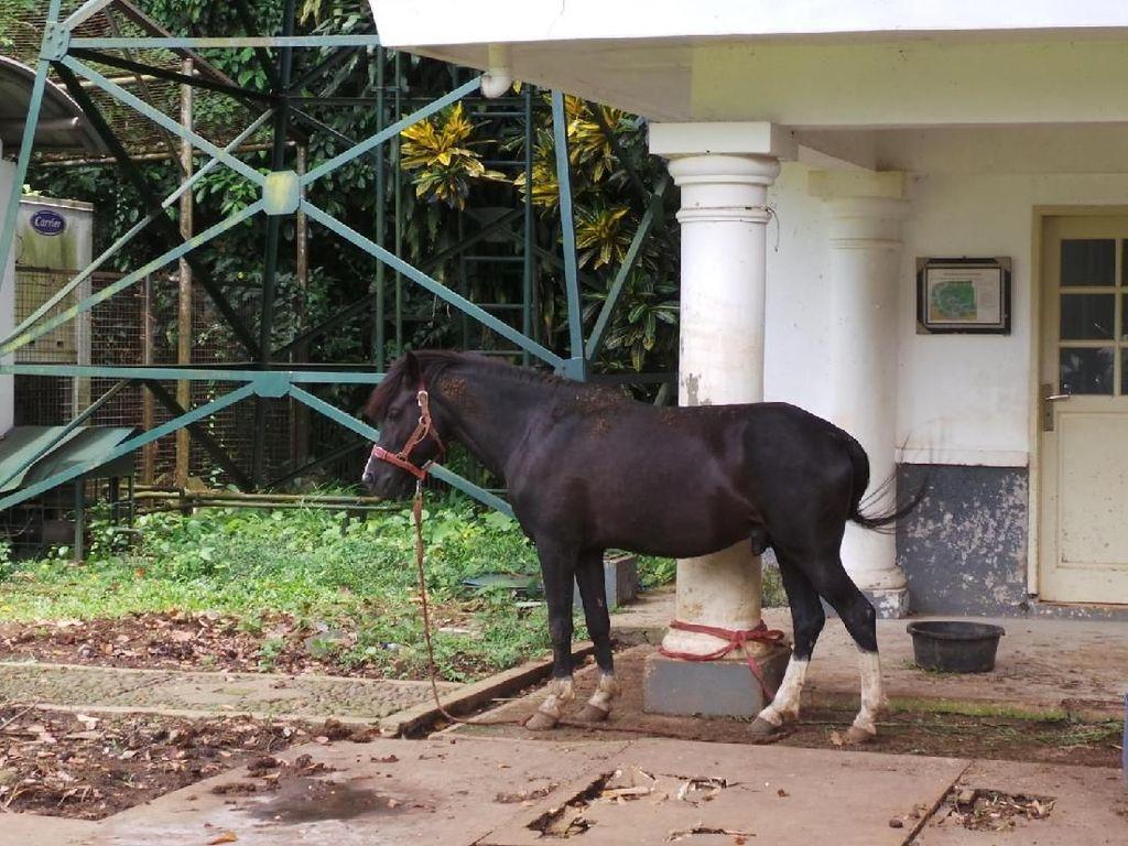 Foto: 2 Kuda Sandalwood Jokowi yang Dititipkan KPK di Istana Bogor