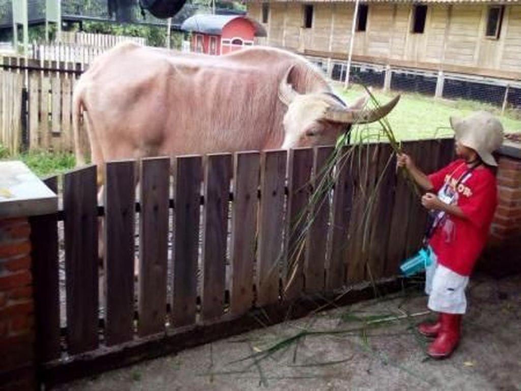 Liburan Bareng Anak, Ajak Bertani dan Berternak Saja!
