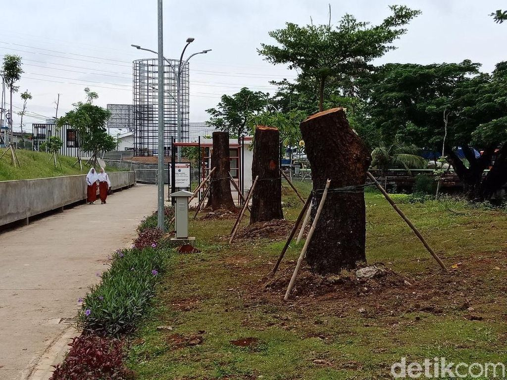 8 Pohon dari Sudirman Sudah Ditanam di Taman Kalijodo