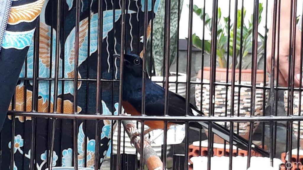 Ini Dia Burung Peraih Piala Presiden yang Ditawar Jokowi Rp 600 Juta