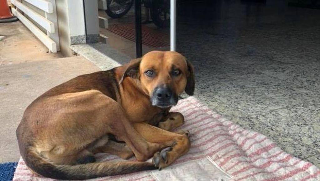 Seperti Hachiko, Anjing Ini Setia Tunggu di RS Sampai Tuannya Meninggal