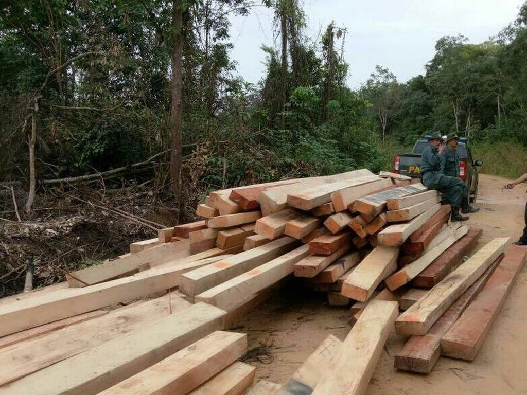 Marak Illegal Logging, KPK Supervisi Permasalahan Hutan di Papua