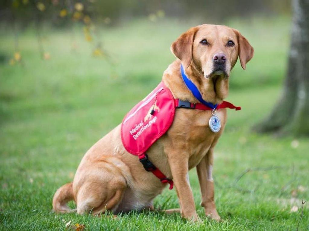 Lucu dan Menggemaskan! Potret Para Anjing yang Jago Mengendus Penyakit