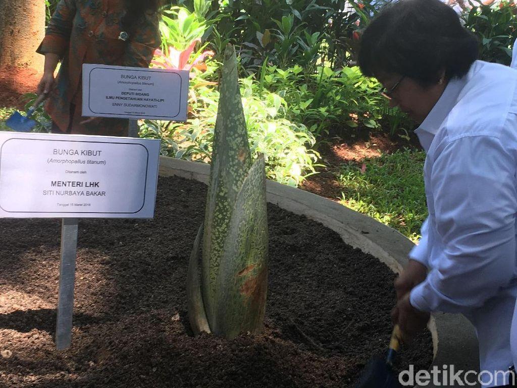 Menteri Siti Tanam Bunga Bangkai di Hutan Kota Kantor KLHK