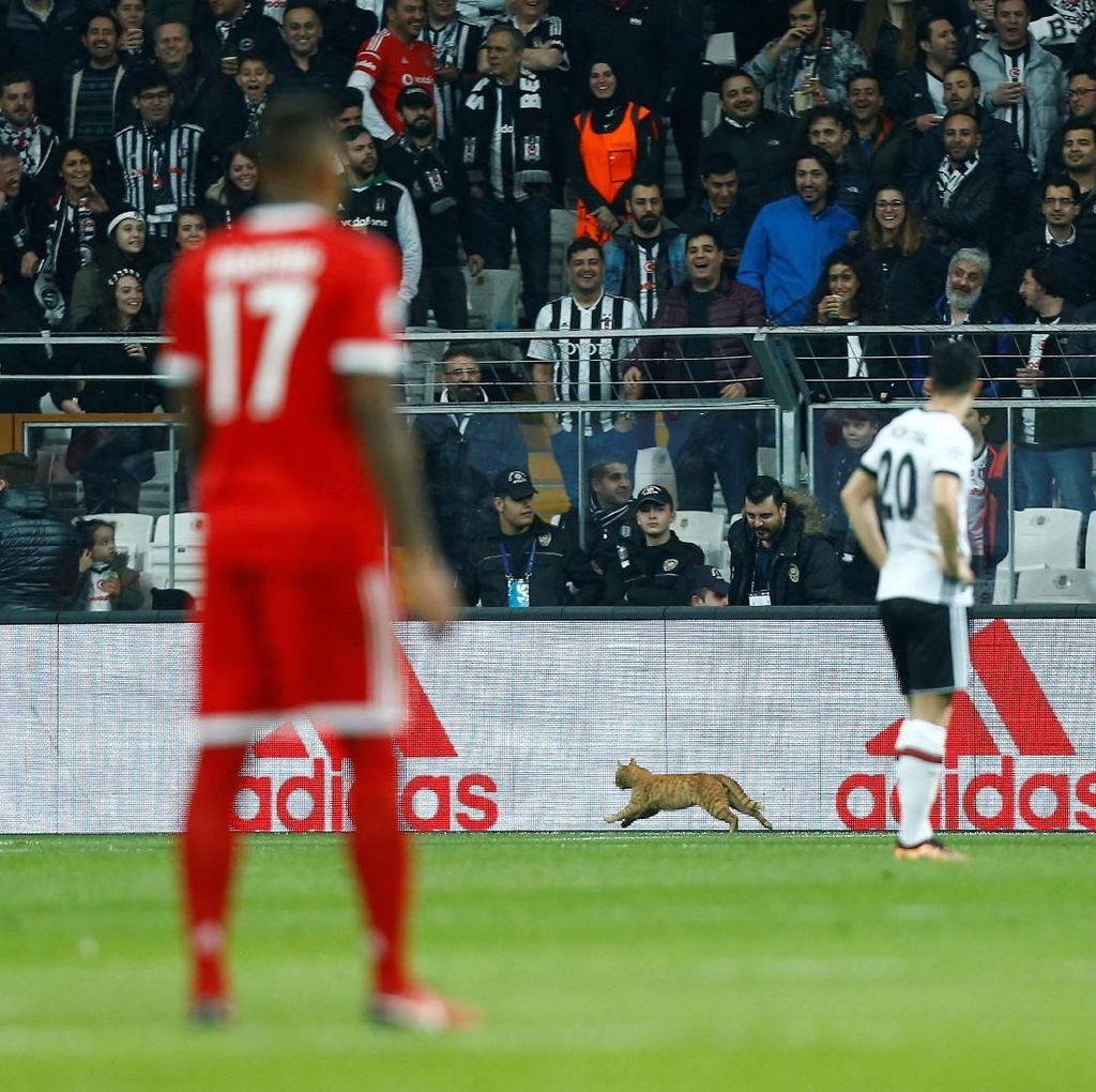 Gara-gara Kucing Masuk Lapangan, Besiktas Terancam Sanksi UEFA