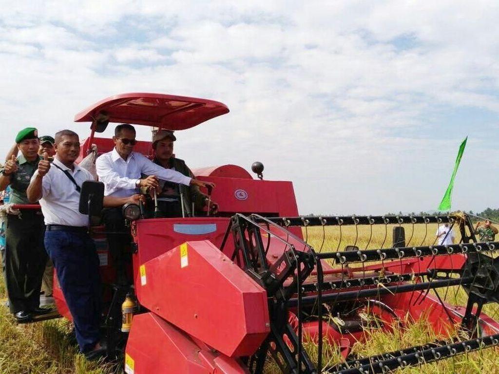 Panen 400 Hektar di Sambas Siap Penuhi Cadangan Beras Pemerintah