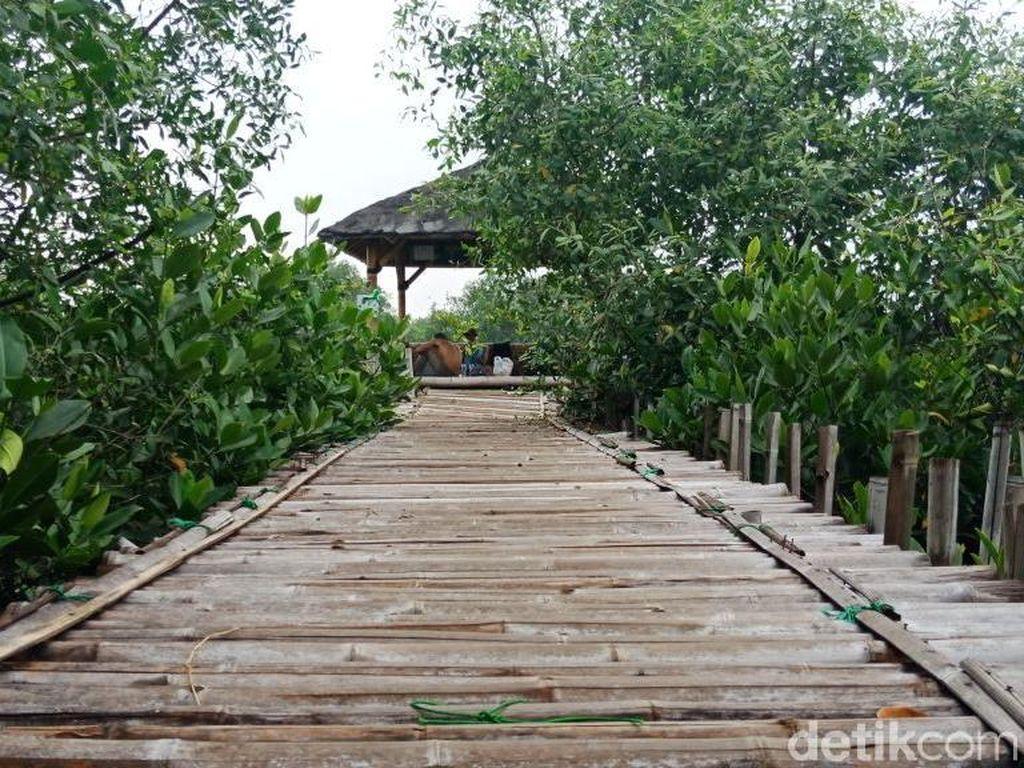 Impian Teluk Jakarta Jadi Tempat Wisata Mangrove Yang Asri