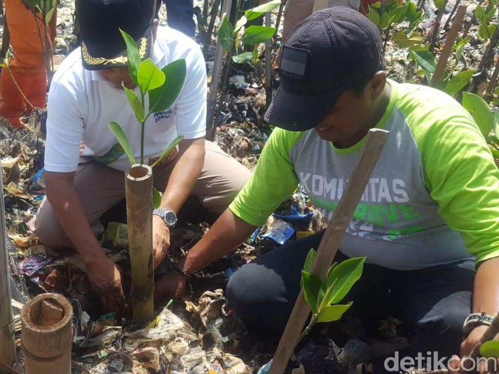 Bibit Mangrove Ditanam di Tumpukan Sampah Teluk Jakarta
