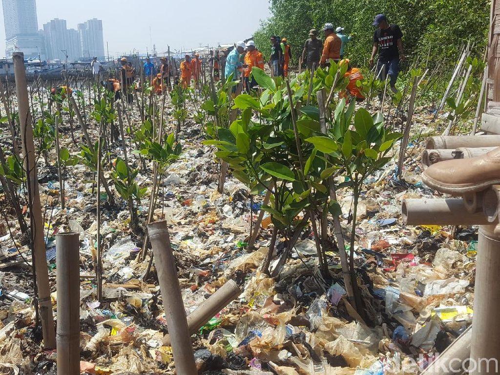 Saat Sampah di Teluk Jakarta Ditanami Mangrove