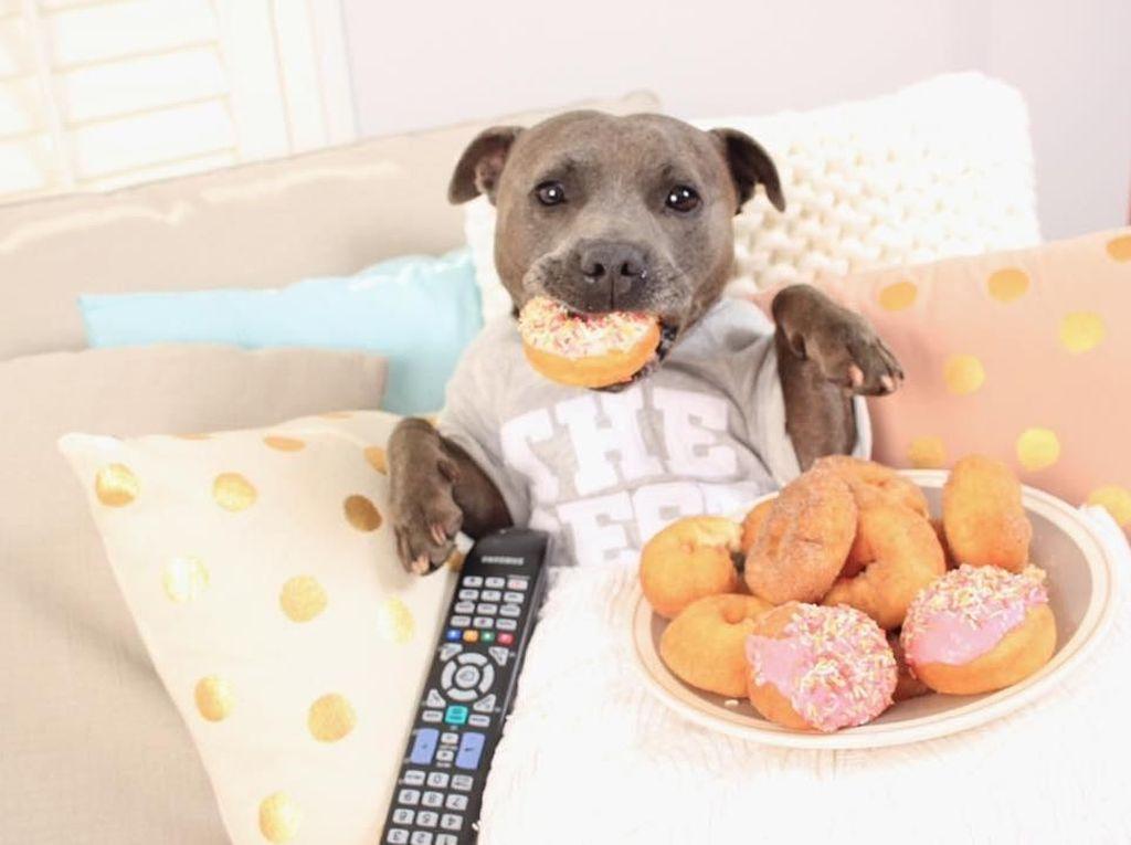 Lucunya! Aksi The Blueboys, Dua Anjing  yang Suka Ngemil Kue dan Popcorn
