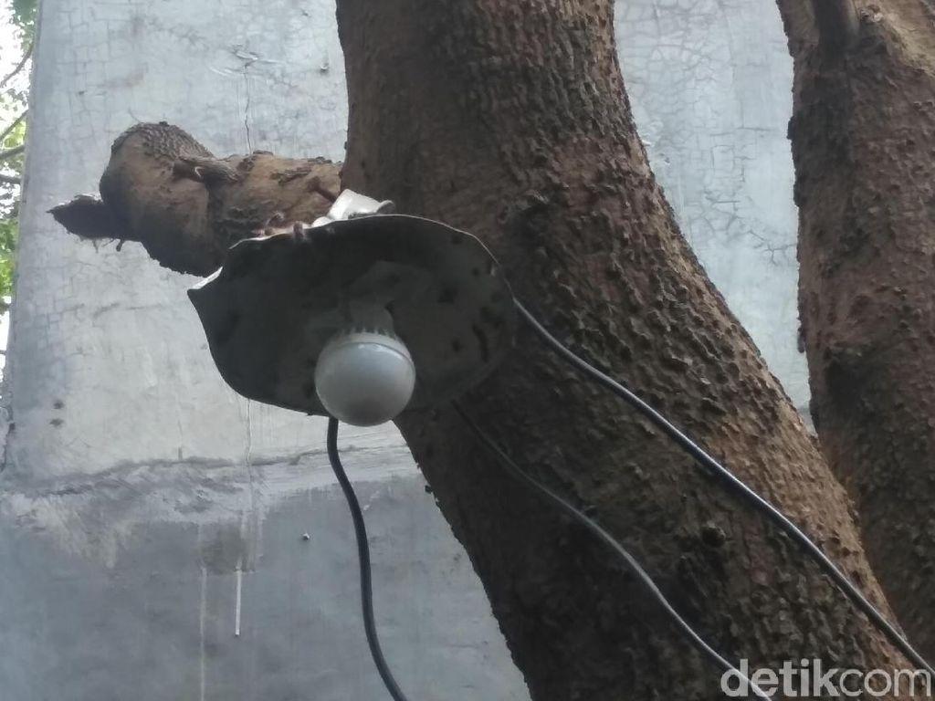 Rupa Ulat Bulu yang Teror Warga Surabaya, dari Pohon Masuk Kamar