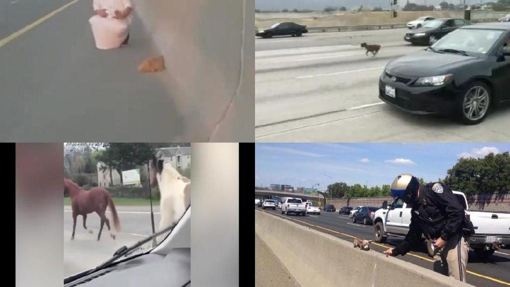 Foto: Anjing, Kuda, hingga Bebek Pernah Bikin Heboh di Jalan Tol