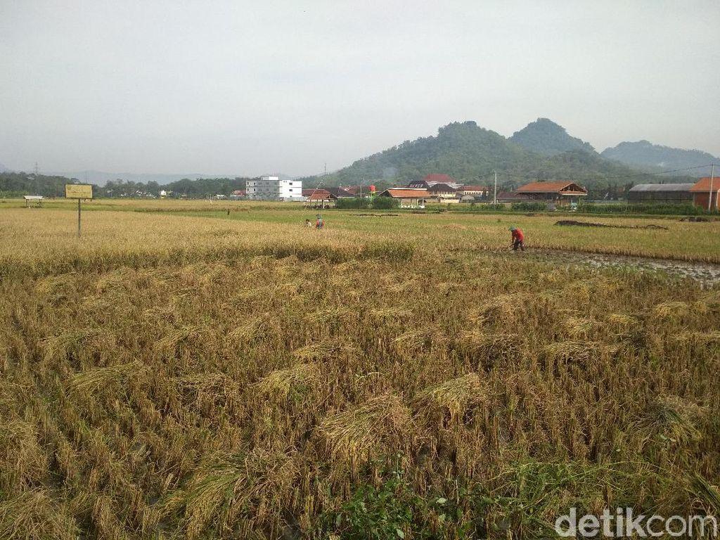 Berkali-kali Ganti Menteri, Alih Fungsi Lahan Pertanian Masih Marak