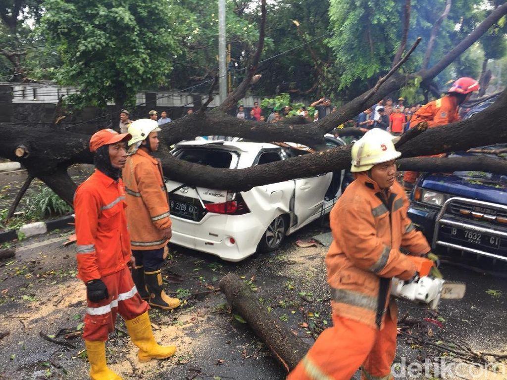 Pohon Tumbang yang Timpa Mobil di Jatinegara Dipotong, Lalin Macet