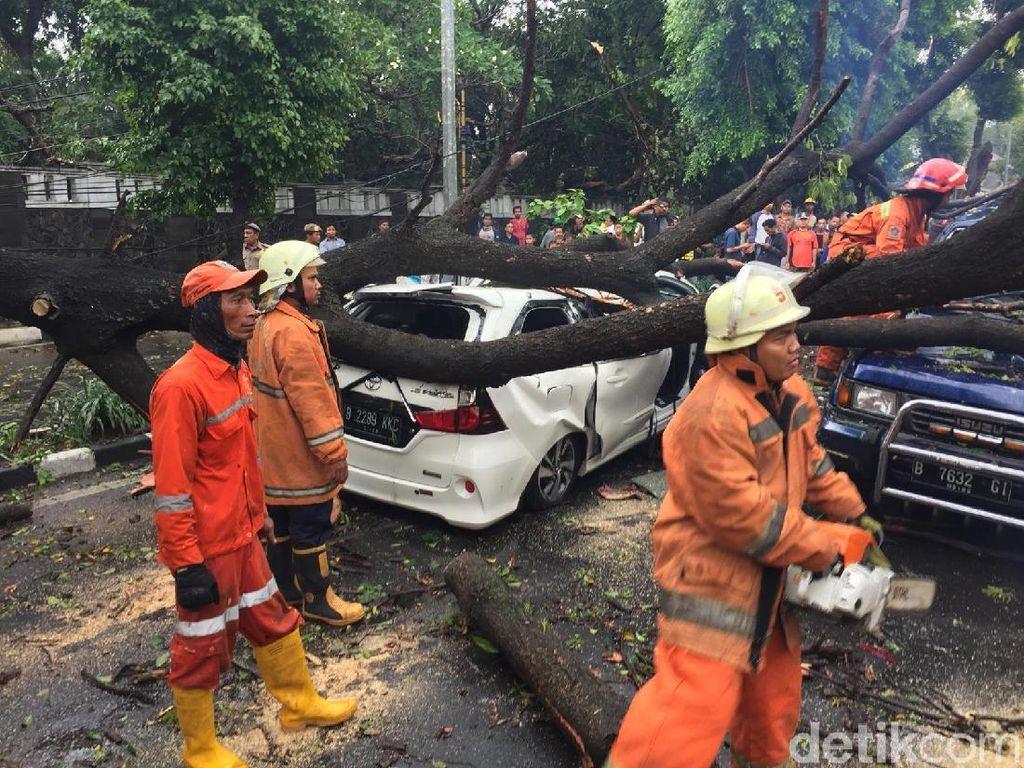 Pohon Tumbang di Jatinegara Timpa 2 Mobil hingga Ringsek