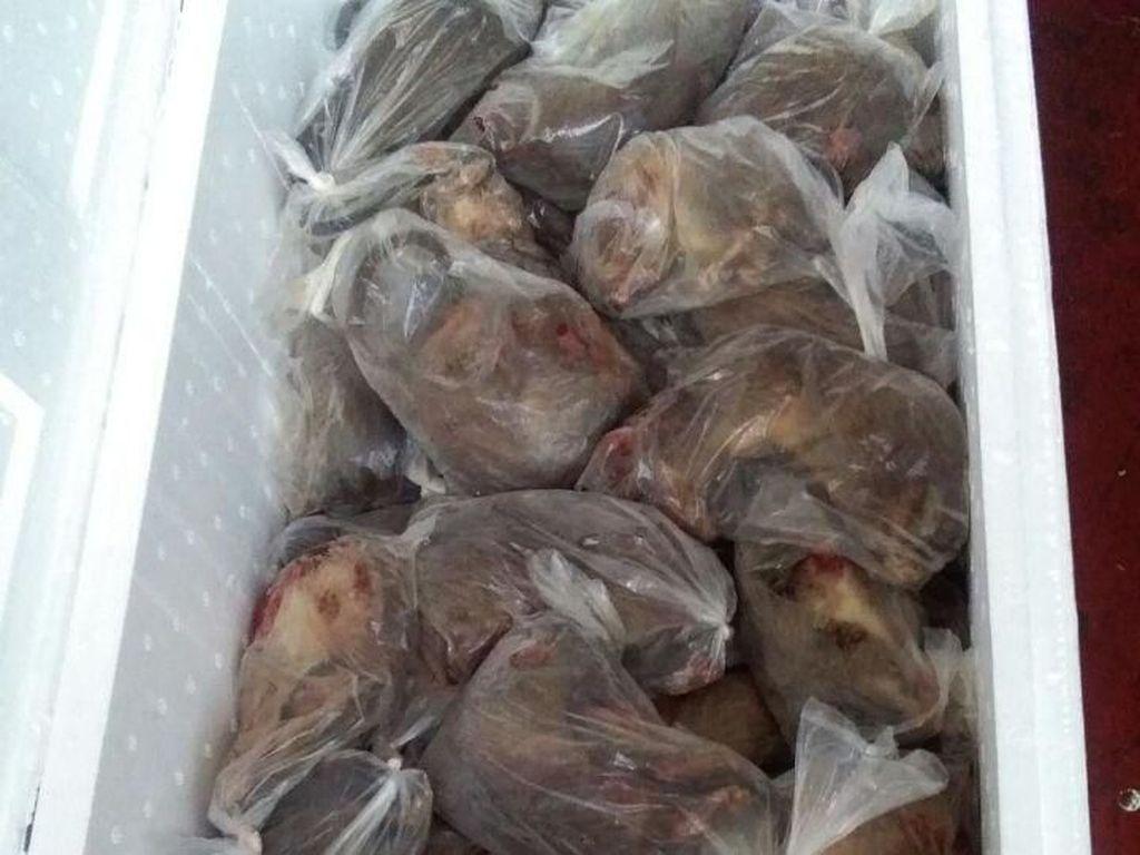 Hiii... 14 Boks Isi Ribuan Tikus Mati Diamankan di Gorontalo