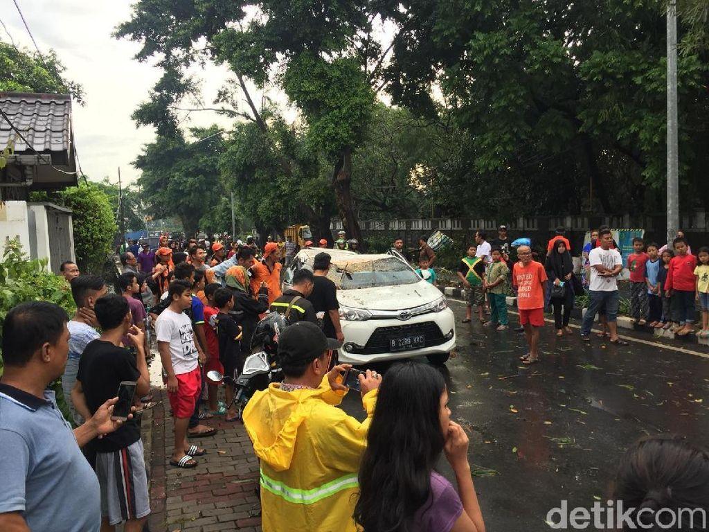 Pohon Tumbang Dievakuasi, Lalin Jl Jatinegara Kaum Dibuka Lagi