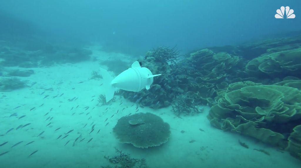 Foto: Melihat Ikan Robot Meliuk-liuk di Perairan Fiji