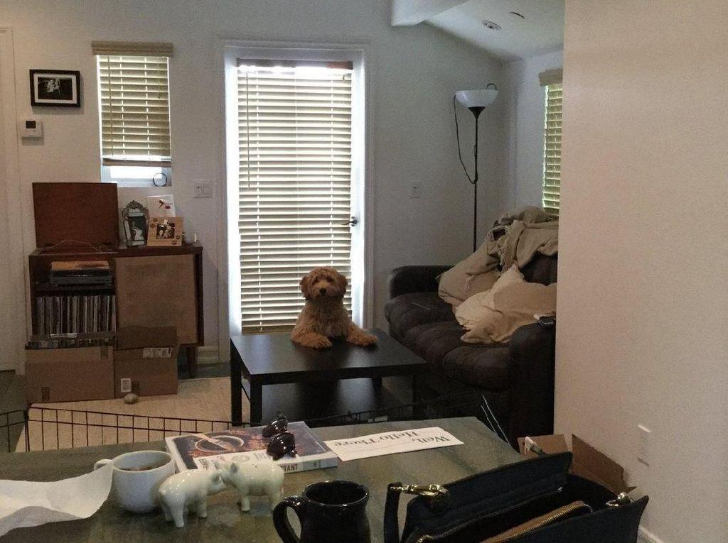 Foto: Setianya Anjing Menggemaskan Ini Tunggu Majikan Pulang Liburan