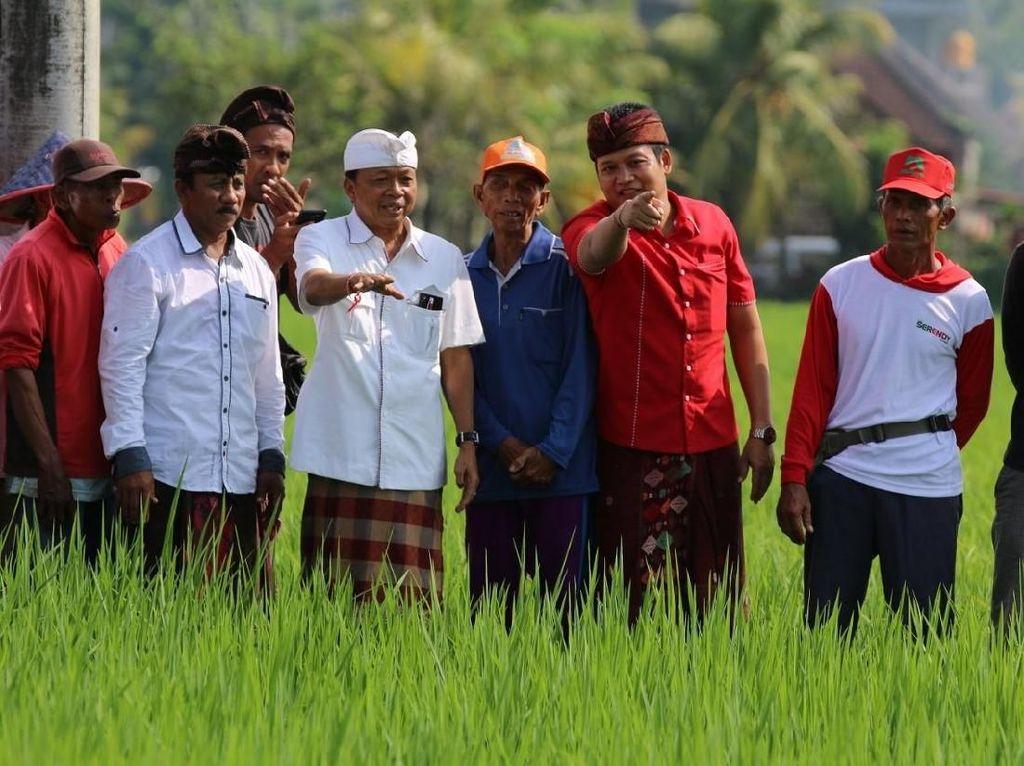 Gubernur Koster Wajibkan Hotel Pakai Produk Petani Lokal Bali