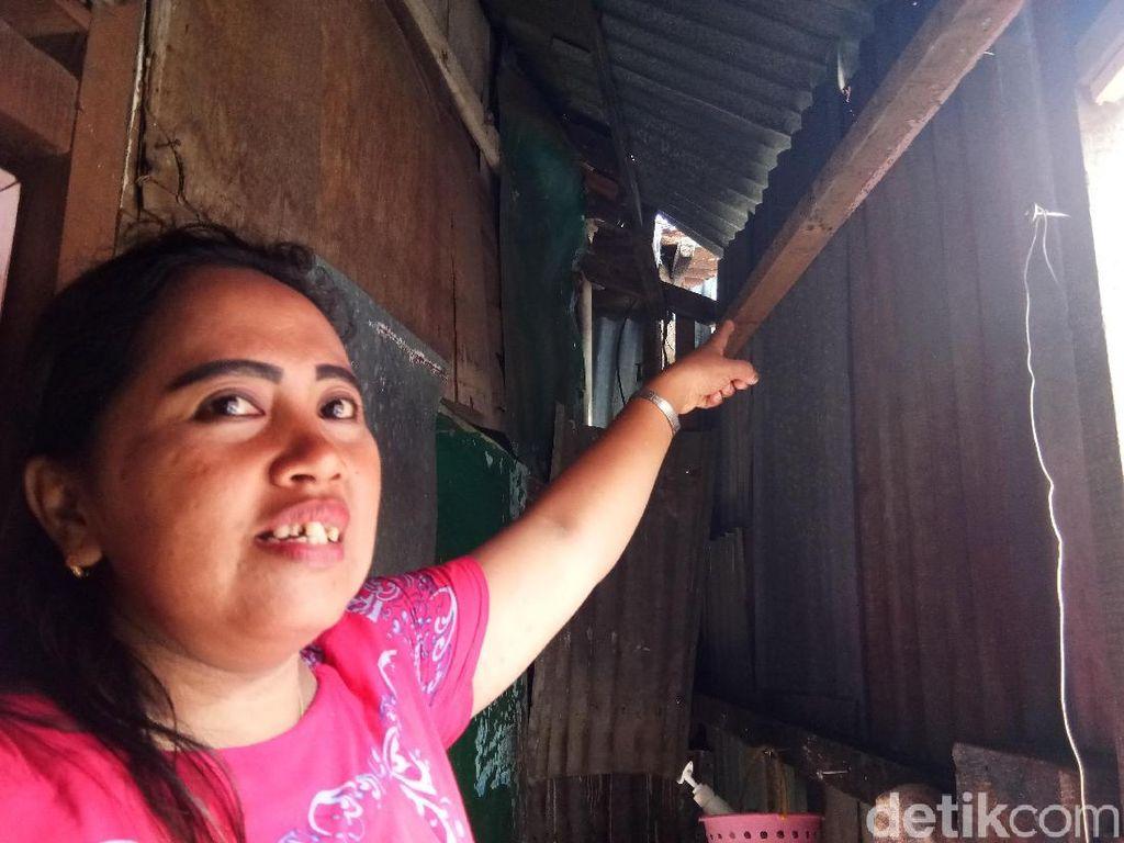 Foto: Ular Piton Tiba-tiba Muncul di Plafon WC Rumah Warga