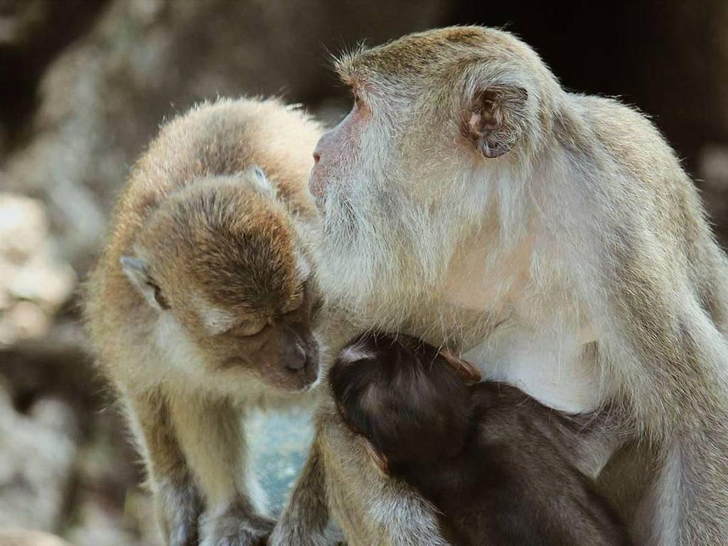 Cacar Monyet Gemparkan Inggris, Penyakit Apa Lagi Sih Itu?