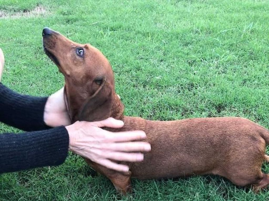 Jilatan Anjing Membuat Tangan dan Kaki Pria Ini Harus Diamputasi
