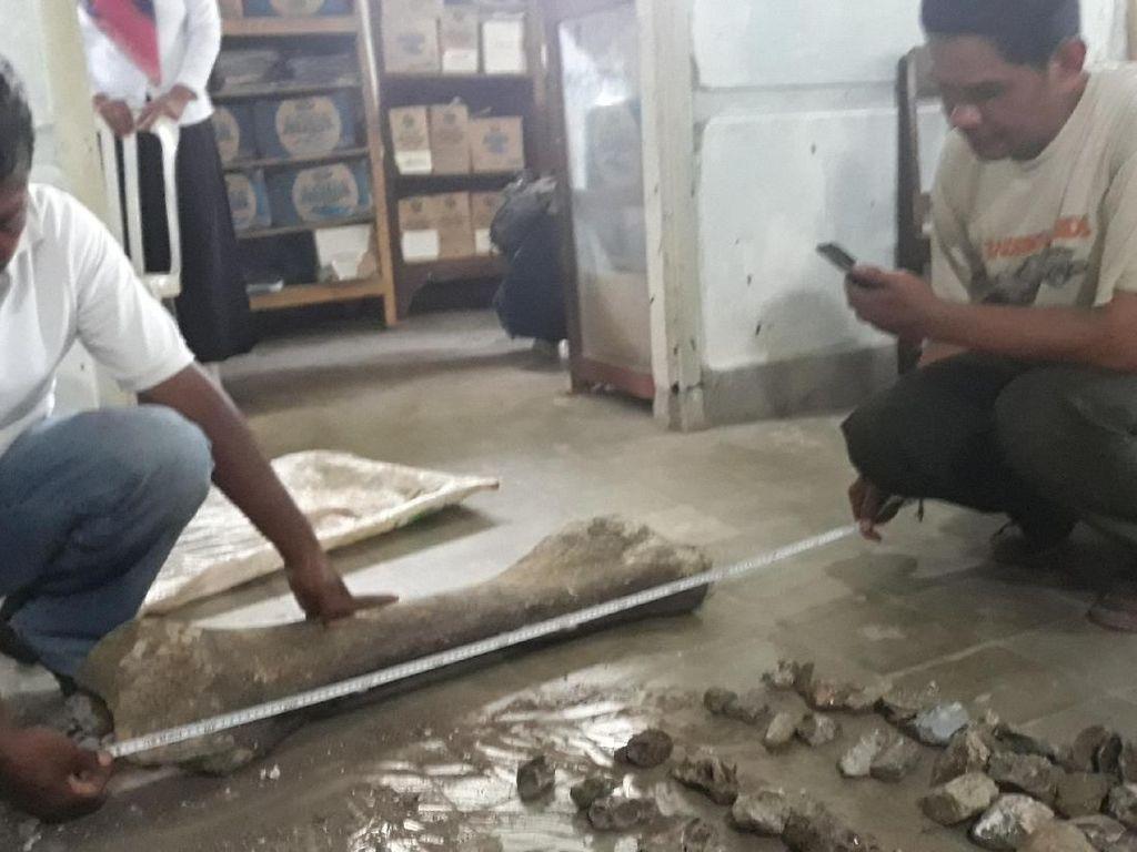 Seberapa Besar Sih Fosil yang Ditemukan di Ngawi?