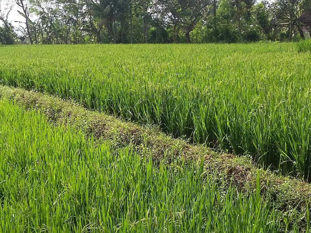 Merefleksikan Kembali Masalah Pertanian
