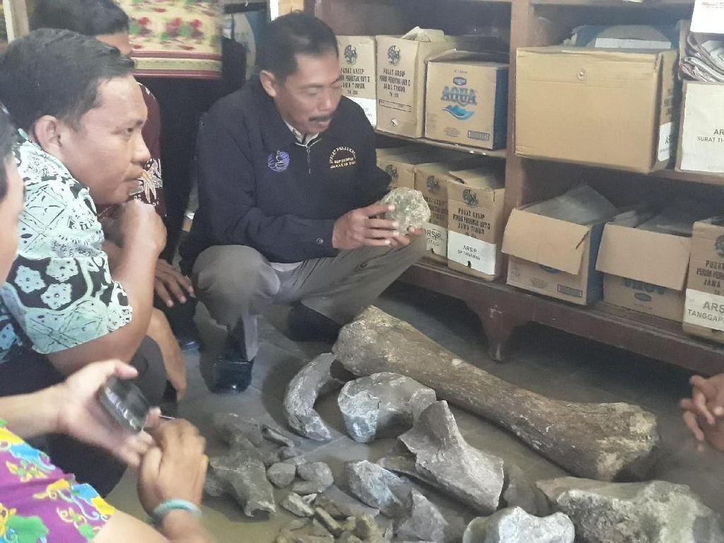 Museum Trinil Dilibatkan Teliti Temuan Dugaan Fosil di Ngawi