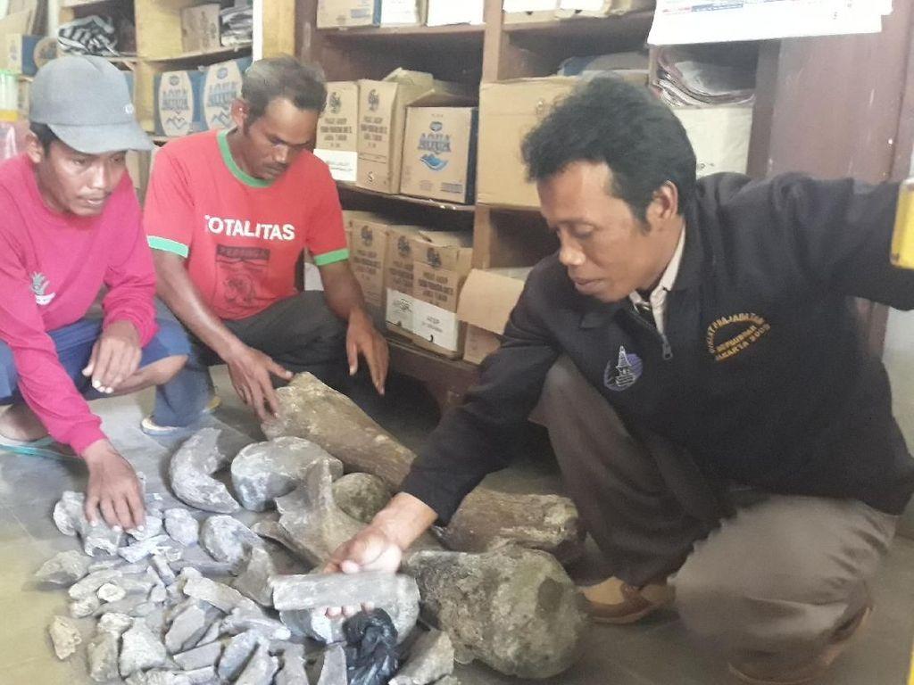 Temuan Tulang di Ngawi, BPCB Trowulan: Itu Fosil Gajah Purba