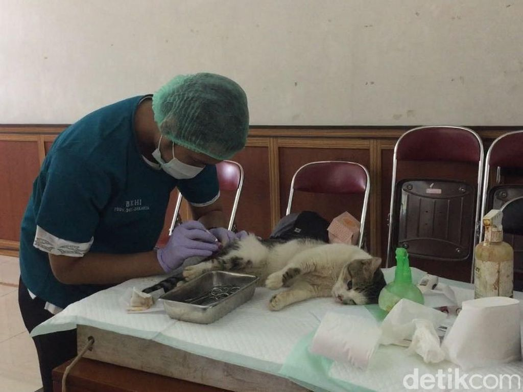 Puluhan Kucing Jantan di Duren Sawit Dikebiri