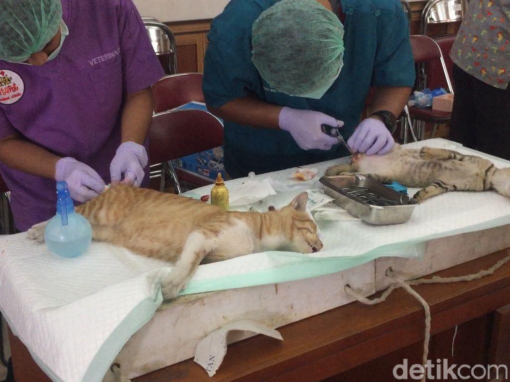 Foto: Petugas Medis Kebiri Puluhan Kucing Jantan di Jaktim