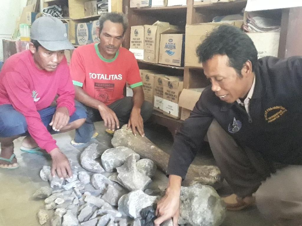 Penemu Fosil di Ngawi Minta Uang Lelah, Ini Kata Kadispora