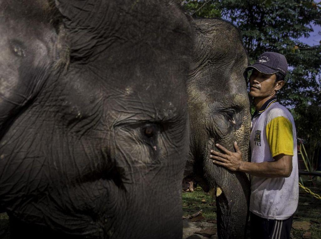 Foto: Lebih Dekat dengan Konservasi Gajah di Riau