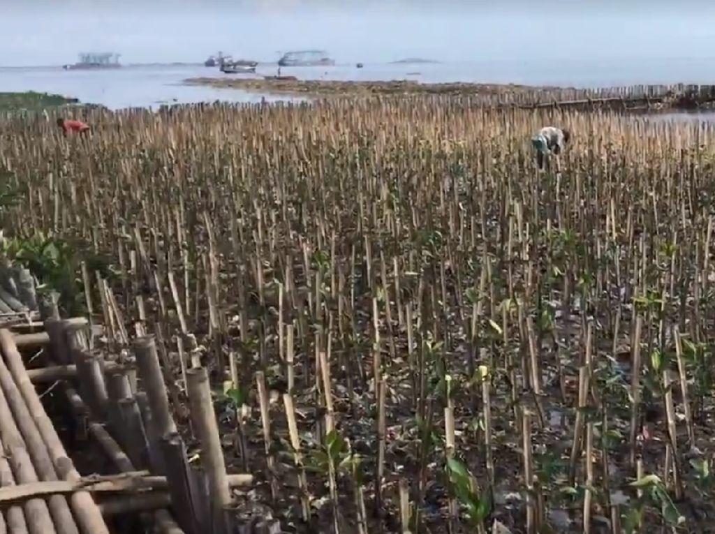 Inilah Penampakan Teluk Jakarta Tanpa Lautan sampah