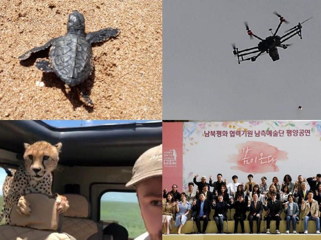Riuh Dunia dalam Gambar: Cheetah Masuk Mobil, Artis K-pop ke Korut
