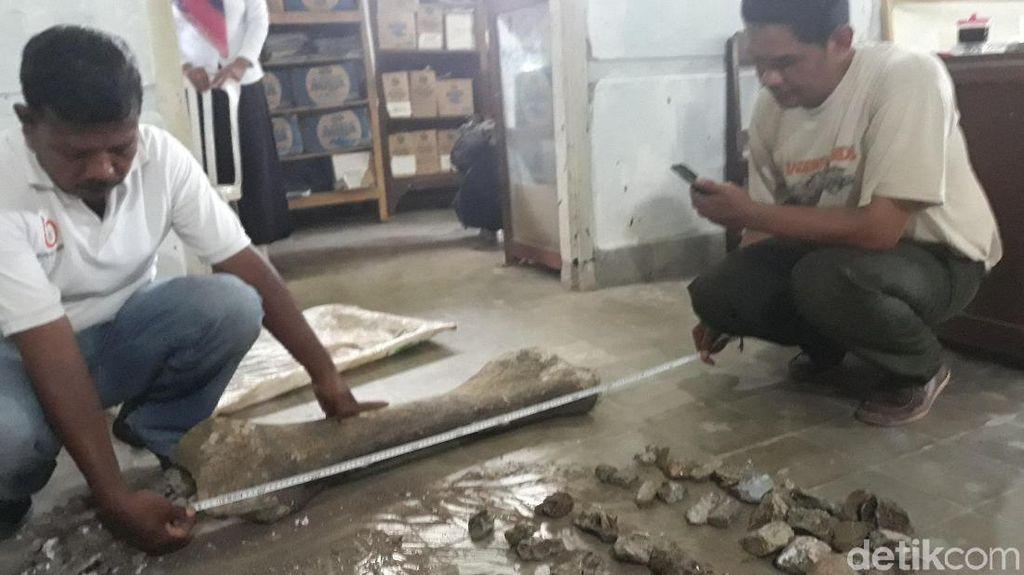 Ini Fosil Gajah Purba di Ngawi, Diprediksi Berusia 1 Juta Tahun