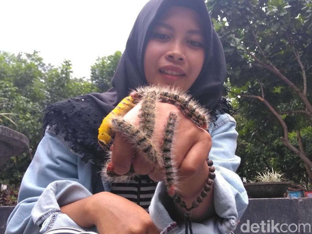 Mahasiswi Ini Hobi Main Ulat Bulu, Lihat Nih Aksi Ekstremnya
